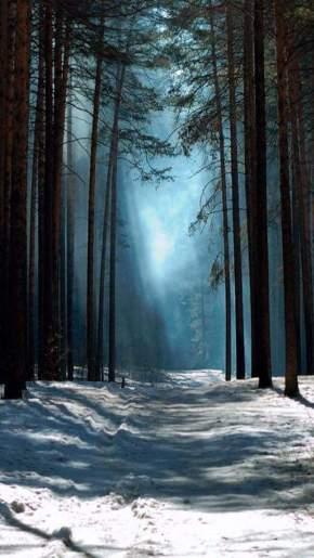 winter quietude